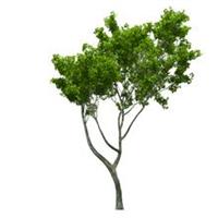 树木-江西利农【恩佐彩票】有限公司