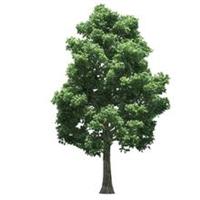 树木-江西利农【恩佐彩票】有限公司1