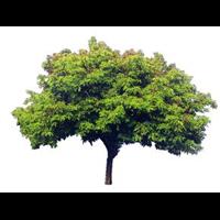 树木-江西利农【恩佐彩票】有限公司2