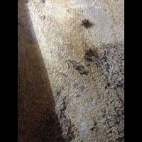 泉州惠安白蚁防治首选雅兴白蚁防治公司