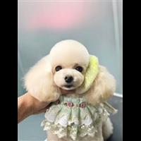 沃德沈阳宠物美容学校的课程类型学习宠物美容要看!