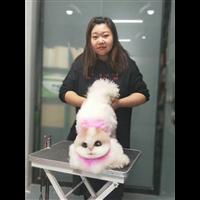 沃德宠物美容课限时优惠!沃德沈阳宠物美容学校