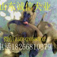 【马犬养殖场】马犬价格