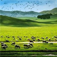 辉腾锡勒草原