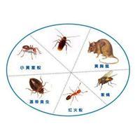 石狮灭白蚁/石狮白蚁防治/石狮抓白蚁