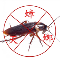 泉港白蚁治理/泉港蚁害治理-灭白蚁