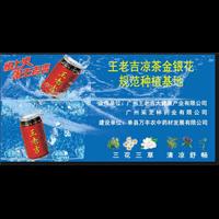 云南新品种金银花供应