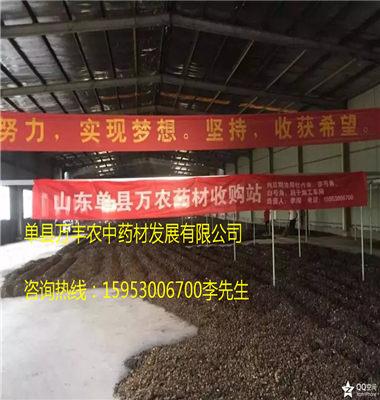聊城赤芍种子@聊城赤芍种子供应@聊城赤芍种子出售