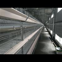 长沙小型层叠蛋鸡笼设备/长沙层叠育雏