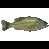 上海鲈鱼批发|上海鲈鱼价格