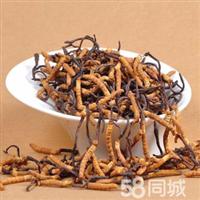 广安虫草回收;15861187903 李老师