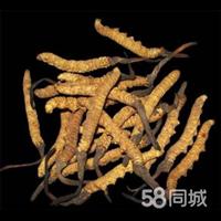 遂宁回收虫草电话;15861187903
