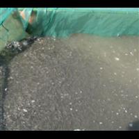 湖北鱼苗养殖基地|湖北哪里有养鱼苗的