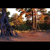 拉尔国家森林公园