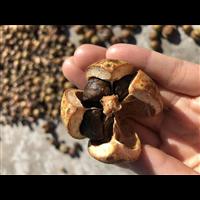 湖南茶油多少钱一斤