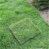 广西草场,广西草皮,广西马尼拉草皮