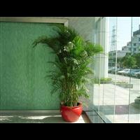 北京北四环会议室桌花-北京鲜花租摆