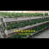 河北栽培袋种植槽|栽培袋种植槽厂家