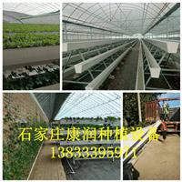 河北草莓种植槽|河北草莓种植槽供应商