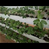 赞皇草莓种植槽厂家-赞皇草莓种植槽