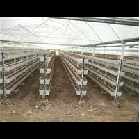 井陉草莓种植槽厂家-井陉草莓种植槽
