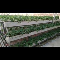 无极壁挂式种植槽厂家-无极壁挂式种植槽