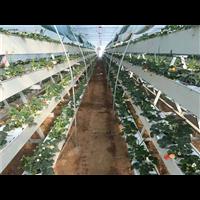 高邑种植槽厂家-高邑种植槽