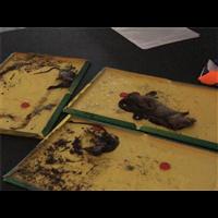 襄阳樊城区有害生物防治消杀公司