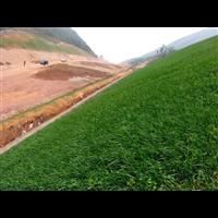 四川边坡绿化网热销-边坡绿化网厂家直销电话