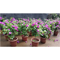 武汉绿化公司提供小区绿化商铺绿化,武汉园林绿化花箱绿化