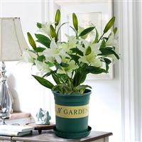 武汉园林绿化公司提供花卉绿植销售,武汉绿化租摆养护