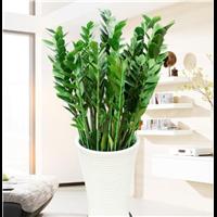 武汉植物服务盆景租售花木出租,武汉绿植养护花卉租摆花卉销售