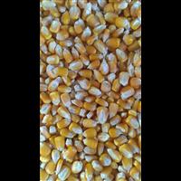 北方綠野糧貿丨北方綠野玉米