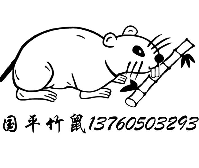 江门竹鼠/台山竹鼠/开平竹鼠/恩平竹鼠/新会竹鼠/鹤山竹鼠