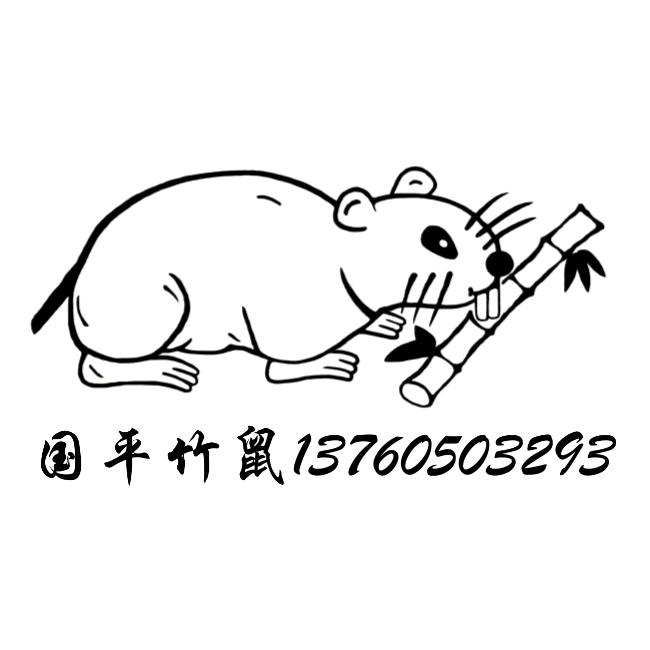 珠海竹鼠/香洲竹鼠/斗门竹鼠/金湾竹鼠