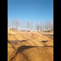 承泰農牧丨承泰玉米