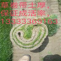 潍坊绿化草坪卷 潍坊草坪基地