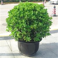 武汉公司绿植花木送货上门,绿化苗木盆栽租售维护服务
