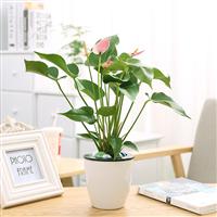 武汉植物租赁植物养护绿植养护,武汉绿植租赁花卉养护