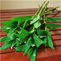 武汉花卉租售植物租售花卉服务,武汉绿植租售盆景植物
