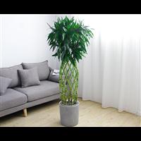 武汉绿植租摆公司办公室内大型植物花卉盆栽出租养护绿植租赁套餐