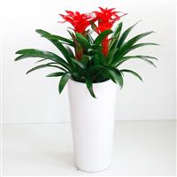 武汉花卉植物盆栽出租价格表,武汉室内外盆栽花卉销售价格表