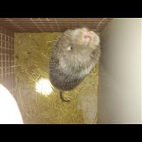 竹鼠养殖什么品种好?湖南竹鼠基地培训