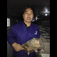 湖南竹鼠多少钱一斤-湖南常年供应竹鼠种苗、湖南成品竹鼠