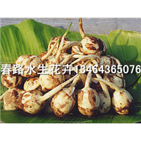 慈姑种苗_春路水生花卉13464365076
