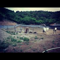 大康养殖丨大康黑山猪