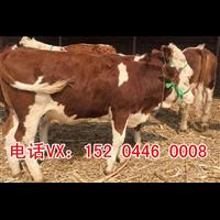 黄牛市场价格多少一斤