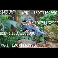 北京真人CS装备 电子报环靶 真人吃鸡装备套装