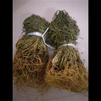 福建哪里有卖水灵芝多少钱-福州水灵芝种植基地