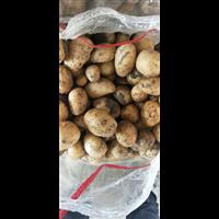 核桃大小土豆